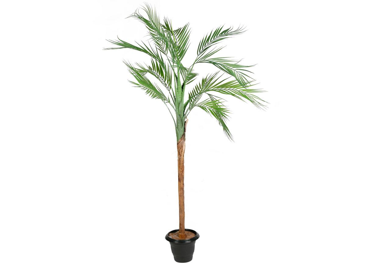 Arvore Palmeira Areca X15 Real Toque 1,4MT Tamanho Natural