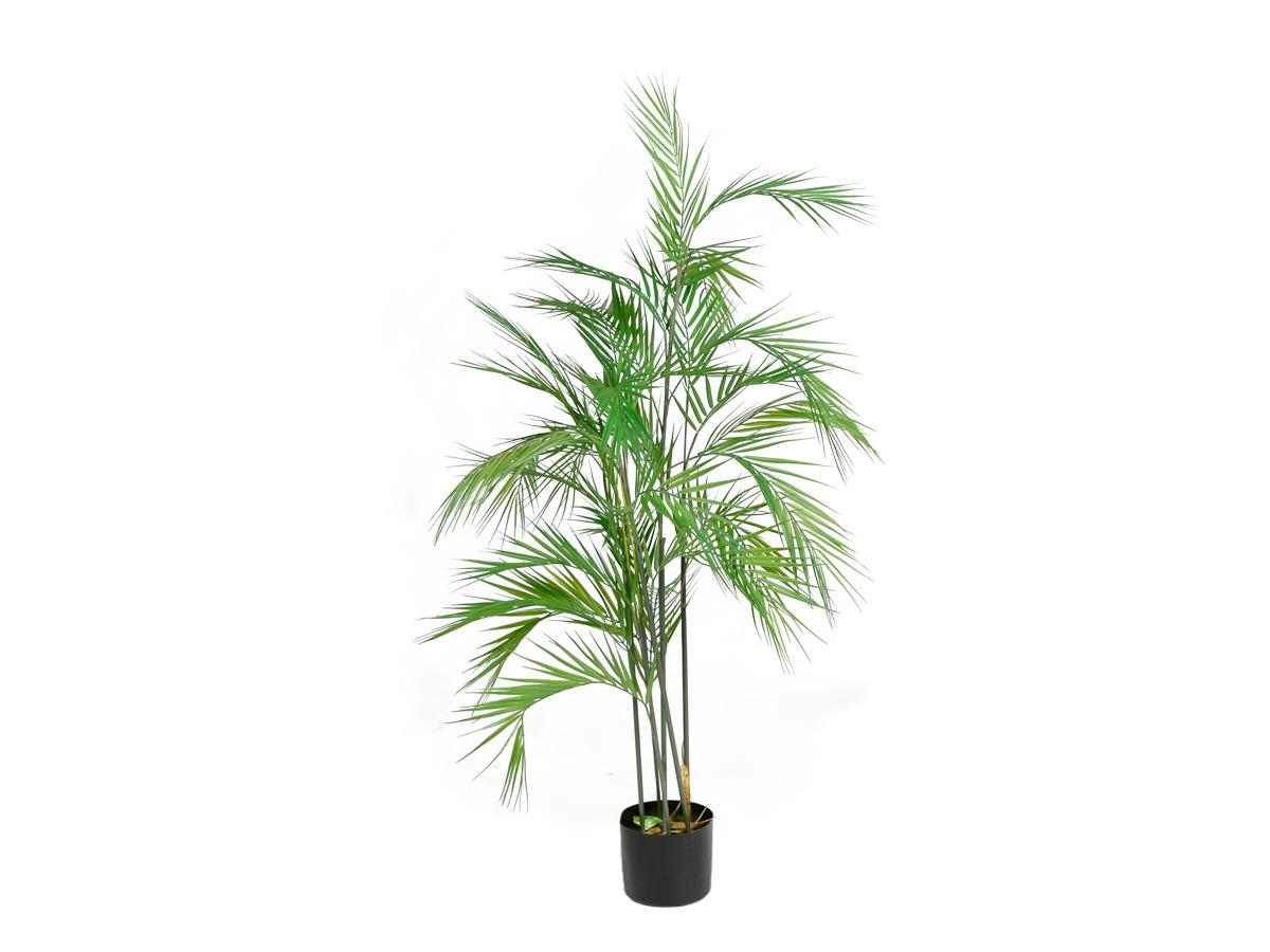 Arvore Palmeira Areca X42 Real Toque 1,70MT No Vaso