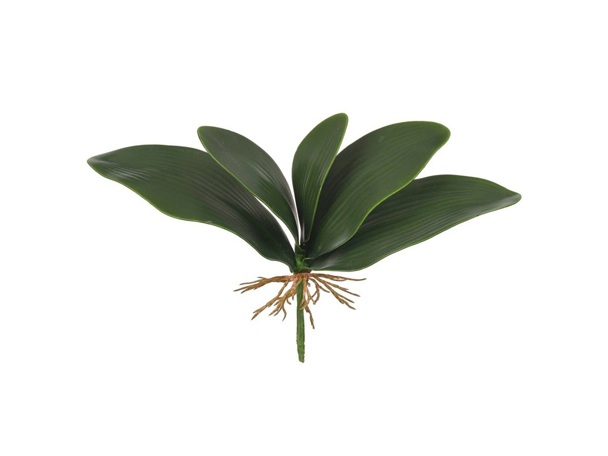 Folha De Orquidea X5 Verde 30cm