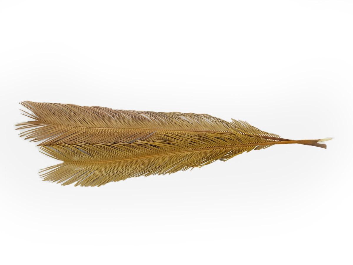 Folha de Palmeira Cyca - 5 folhas - 116 cm