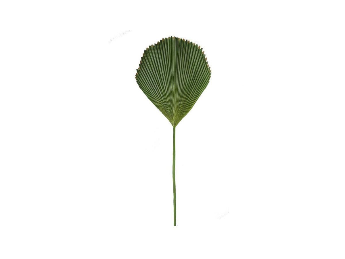 Folhagem Latania Grande - 85 x 41 cm