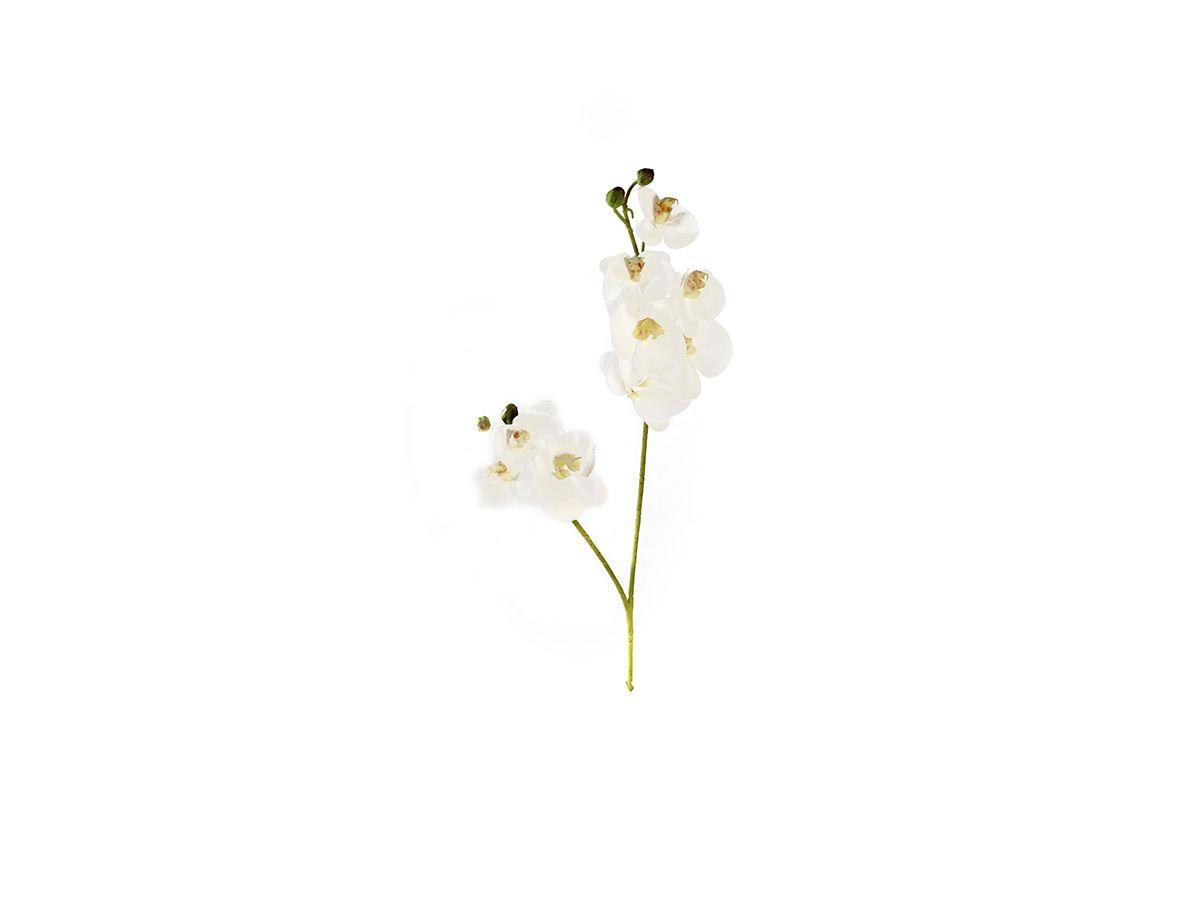Haste Orquidea Dupla X9 55Cm