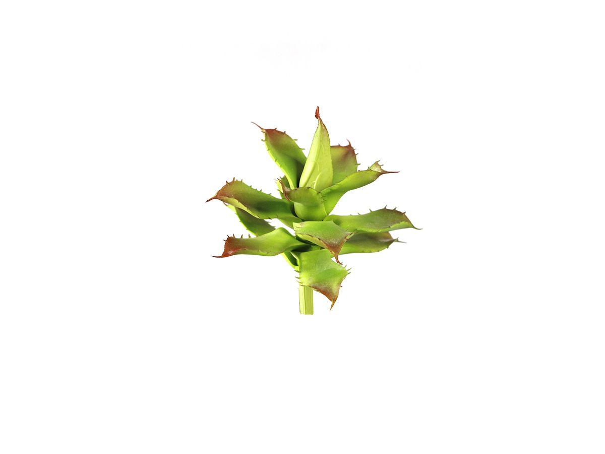 Suculenta Babosa Verde 13Cm 1486