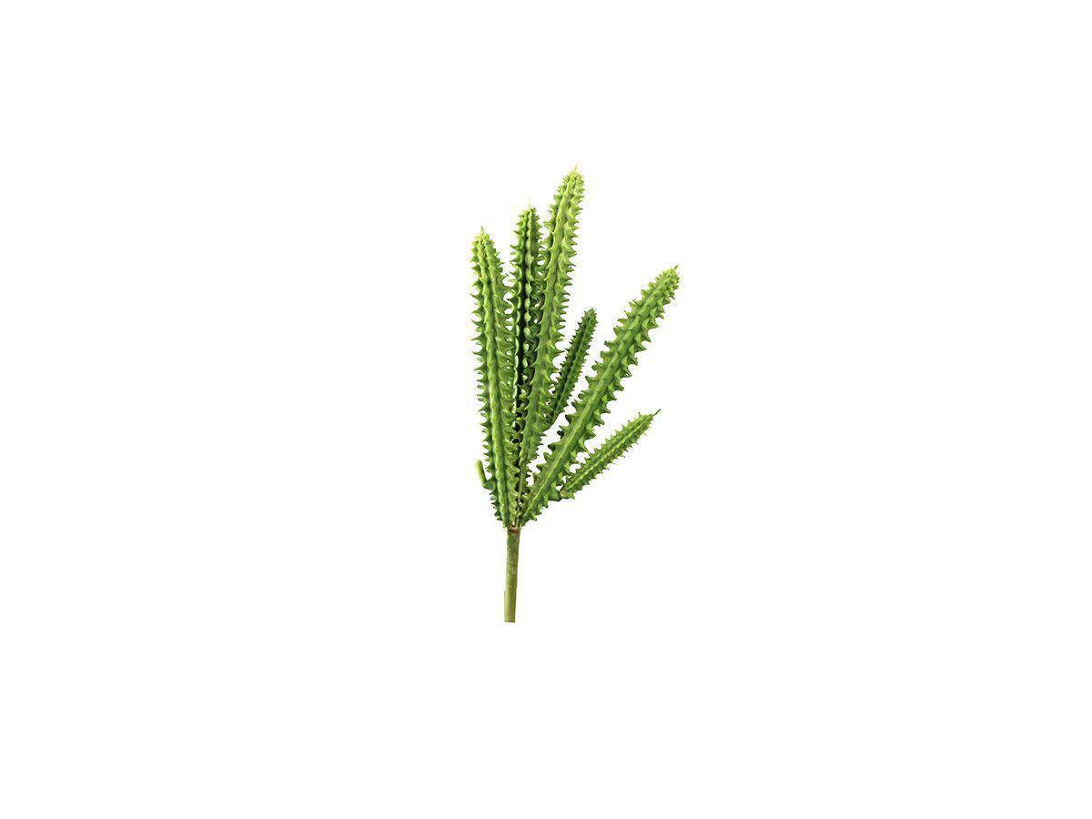 Suculenta Cactos X8 Verde Tons Diversos 16Cm 1490