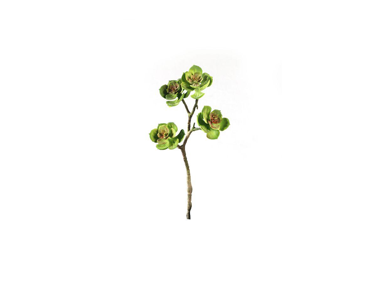 Suculenta Echeveria Longa X4 Verde C/ Verm 33Cm