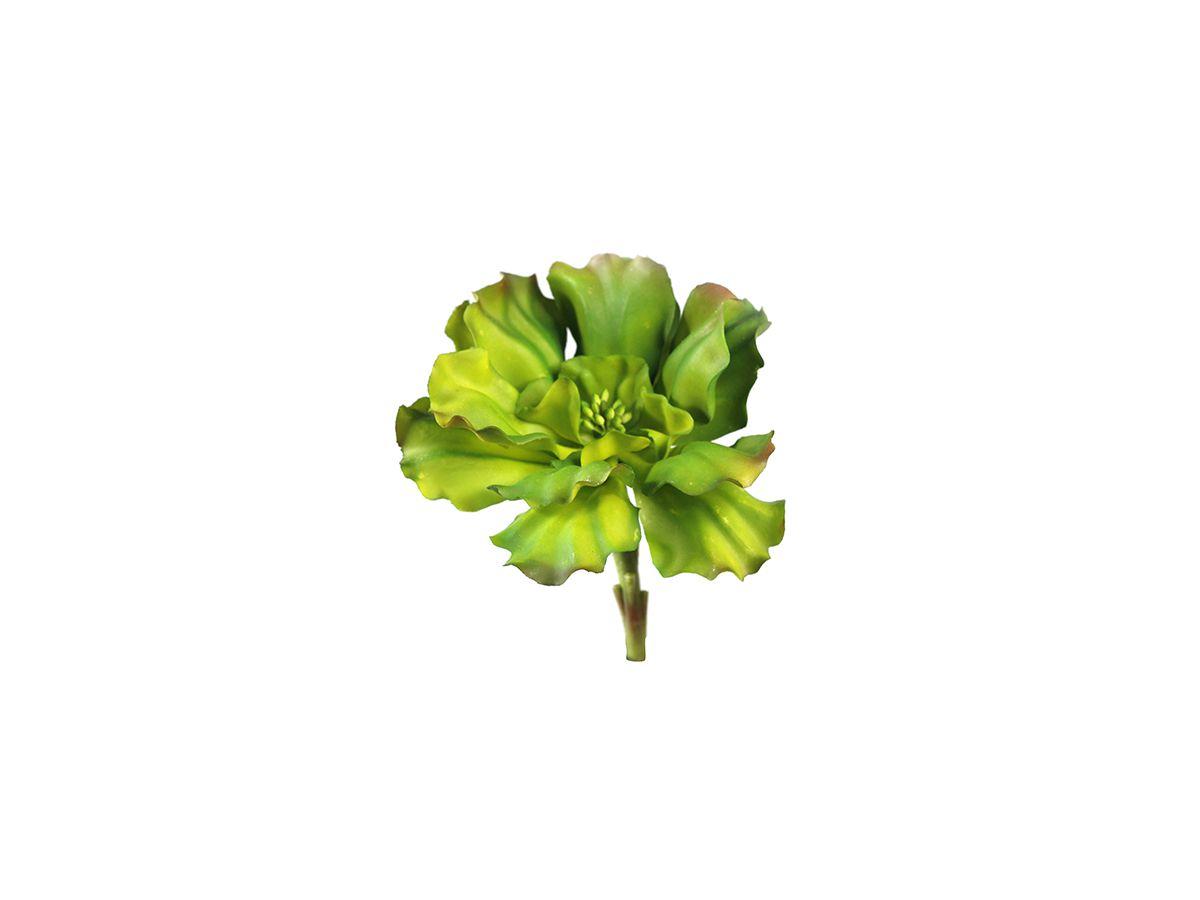 Suculenta Echeveria Shaviana Verde Tons Div 16Cm