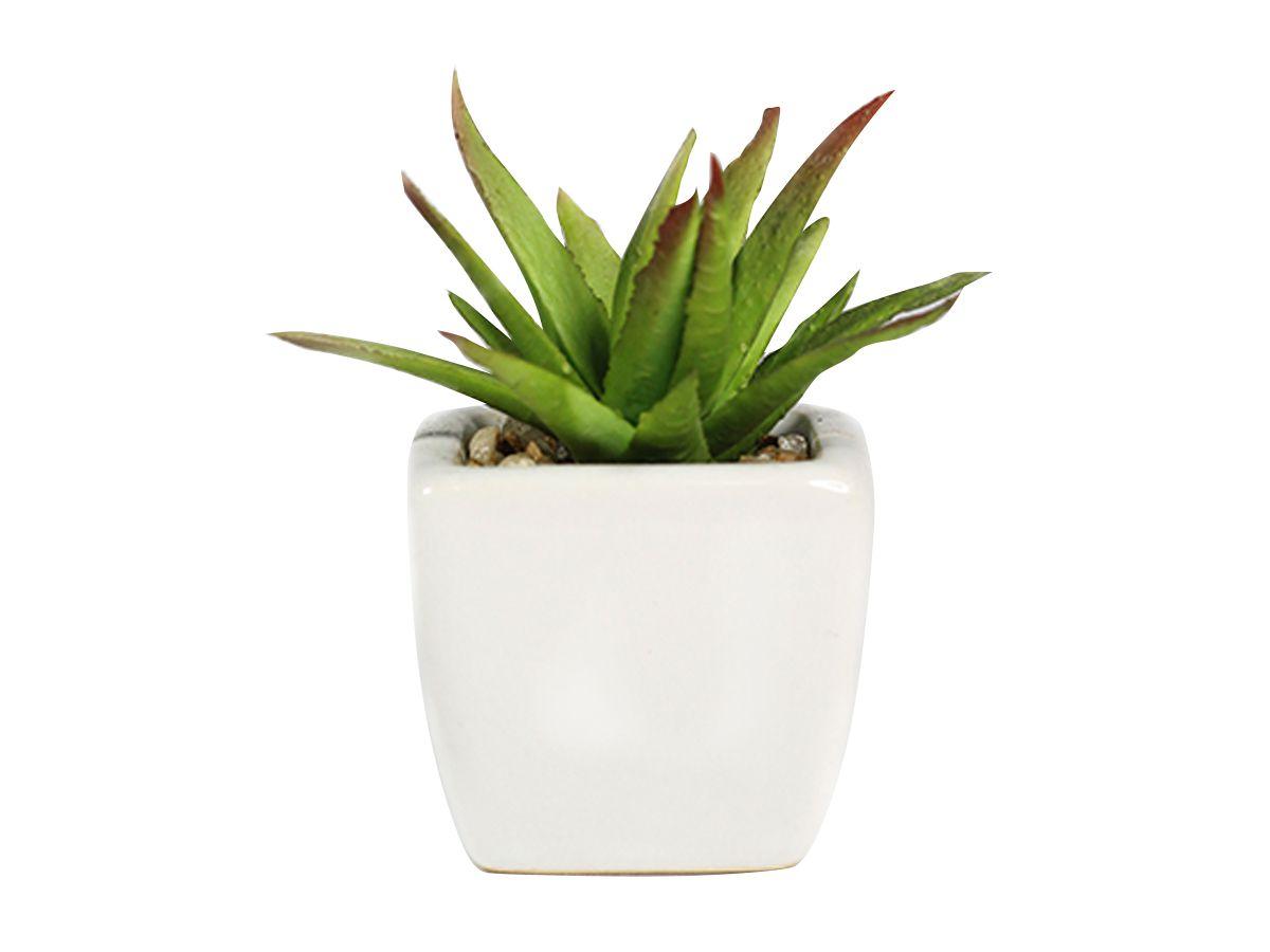 Vaso Branco C/Suculenta Verde Tons Diversos 8Cm