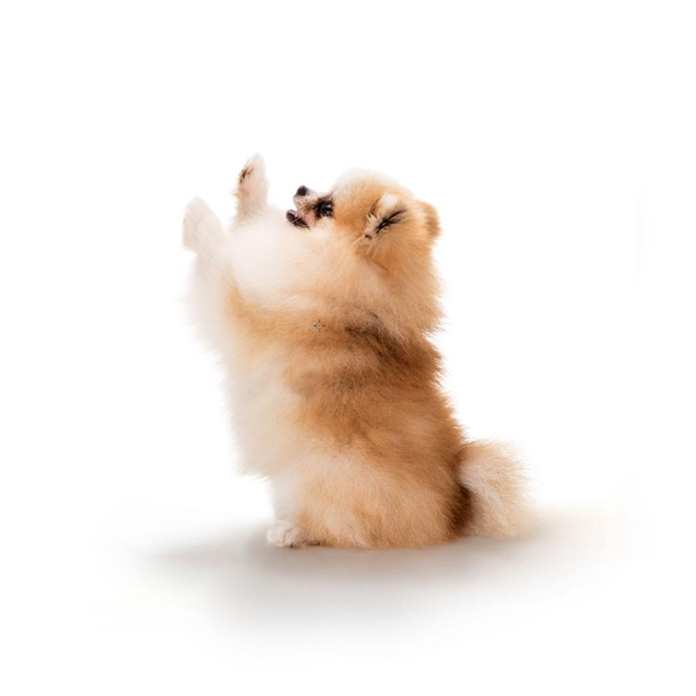 NOVO Eco Tapete Higiênico High Premium Pequeno Porte Dog's Care