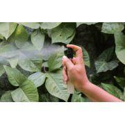 Spray Botânico Natural - Sálvia Branca - Aromaterra Botânica