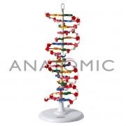 Dupla Hélice de DNA TGD-0001