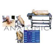 Manequim Avançado de Treinamento Punção Abdominal e Exame de Percussão TGD4026A - Anatomic