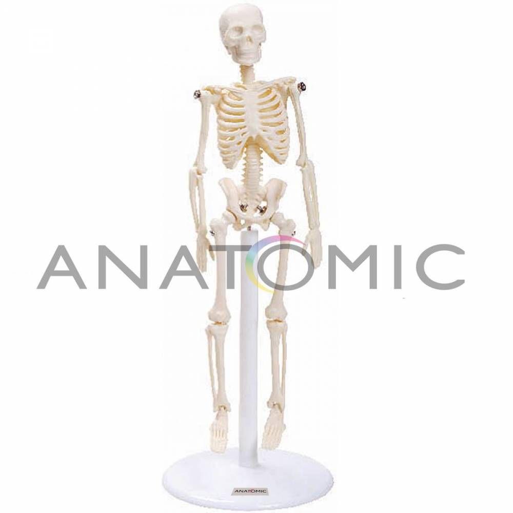 Esqueleto 20Cm TGD0131 Anatomic