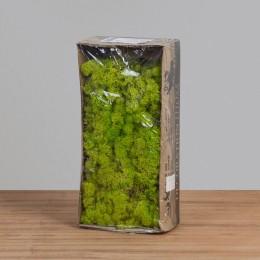 Musgo de Rena Verde Fresco