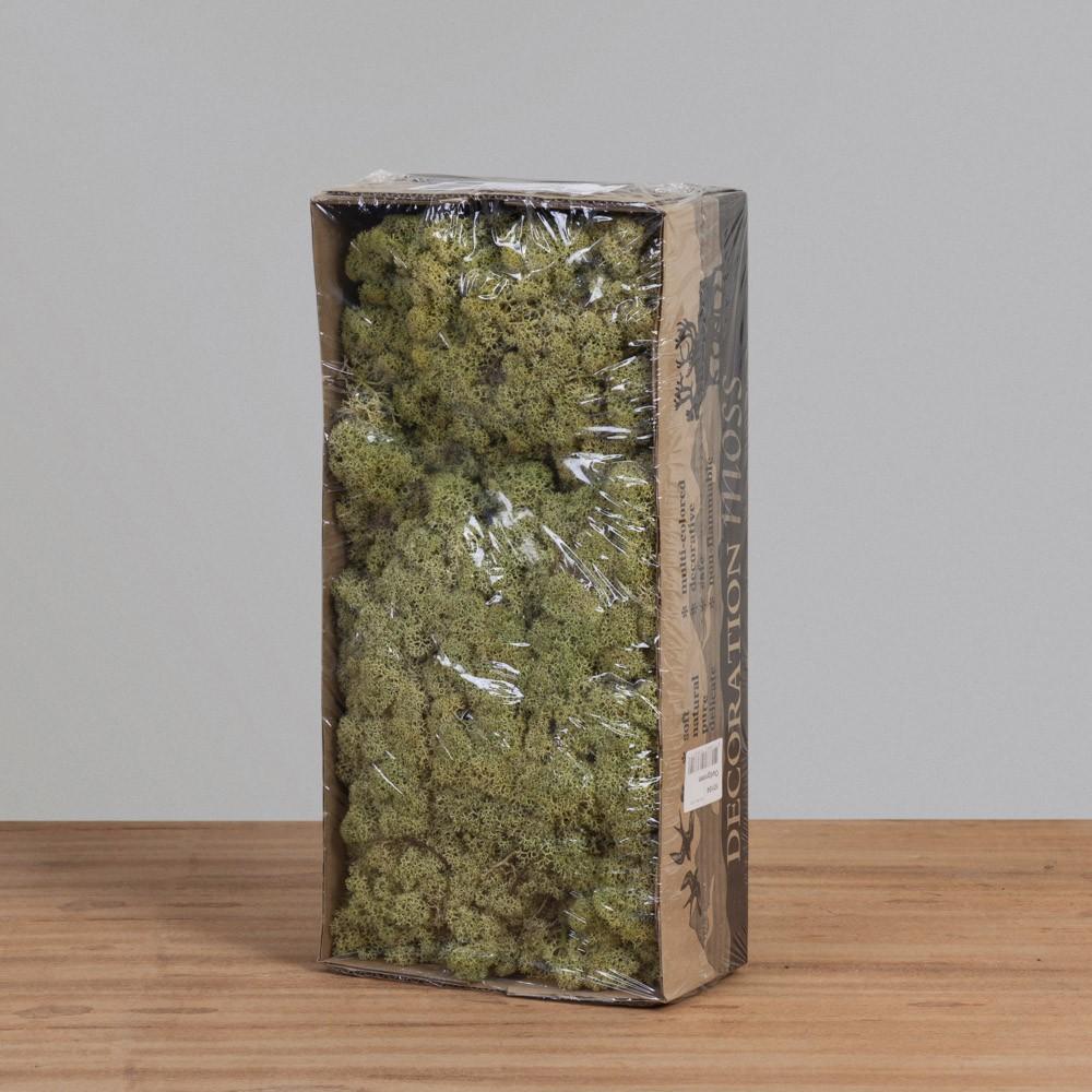 Musgo de Rena Verde Antigo