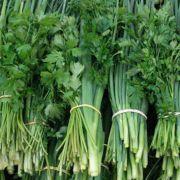 Cheiro-verde Orgânico