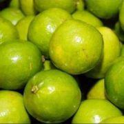 Limão Galego 6 unidades