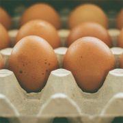 Ovos Orgânicos 12 unidades