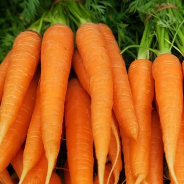 Cenoura Orgânica 1molho (500g)