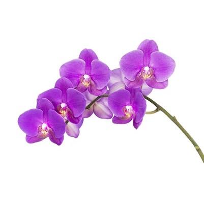 Planta artificial Orquídea 90 cm