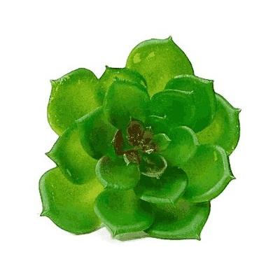 Planta artificial suculenta