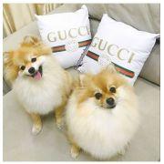 Capa Gucci Personalizada