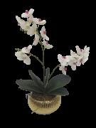 Arranjo Orquidea Phalaenopsis Branca