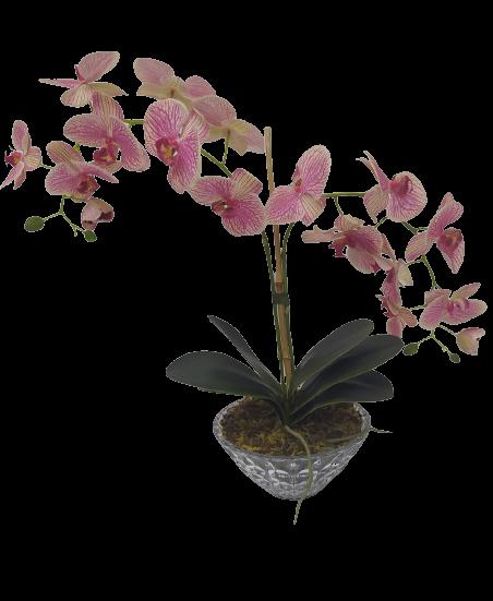 Arranjo Orquídea Phalaenopsis Rosa 3D