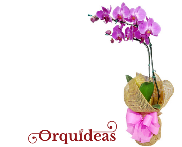 Arranjos feitos com belas orquídeas