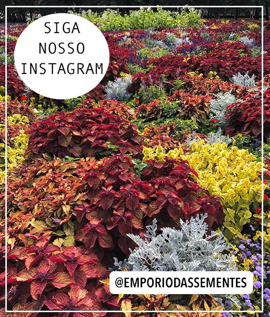 Siga-nos no Instagram