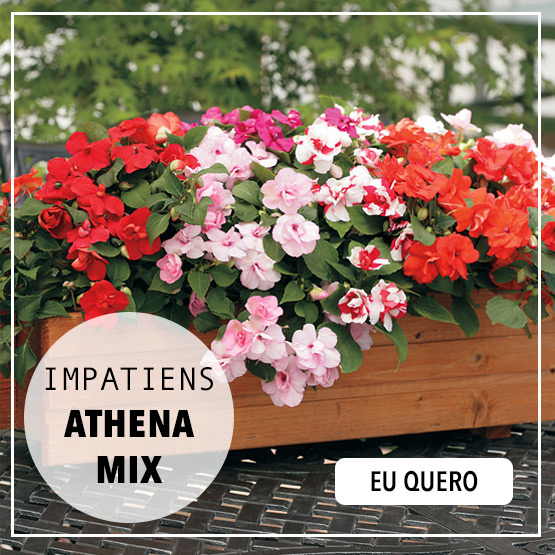 impatiens athena mix