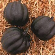 Abóbora Híbrida Pérola Negra (mini abóbora)