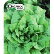 Alface Regina de Verão 100% Orgânica
