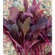 Beterraba Baby Beet (Baby Leaf ou Microverdes)