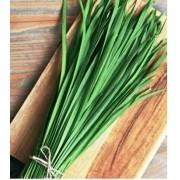Nirá / Alho Japonês (Cebolinha Japonesa) 160 sementes