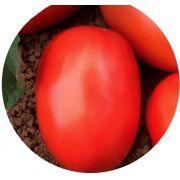 Tomate Italiano Híbrido Oliver F1