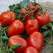 Tomate Rio Grande (rasteiro)