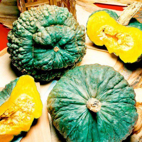 Abóbora Zucchini Redonda (Marina Di Chioggia)