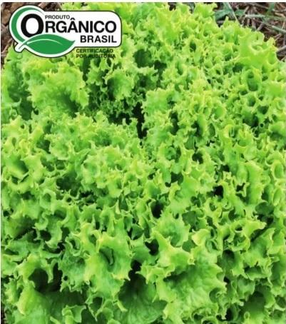 Alface Moana 100% Orgânica