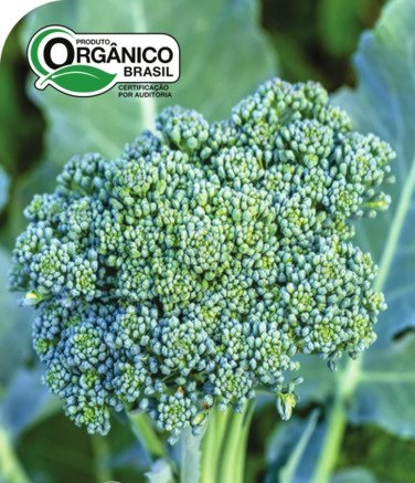 Couve Brócoli Piracicaba (Precoce) 100% Orgânica