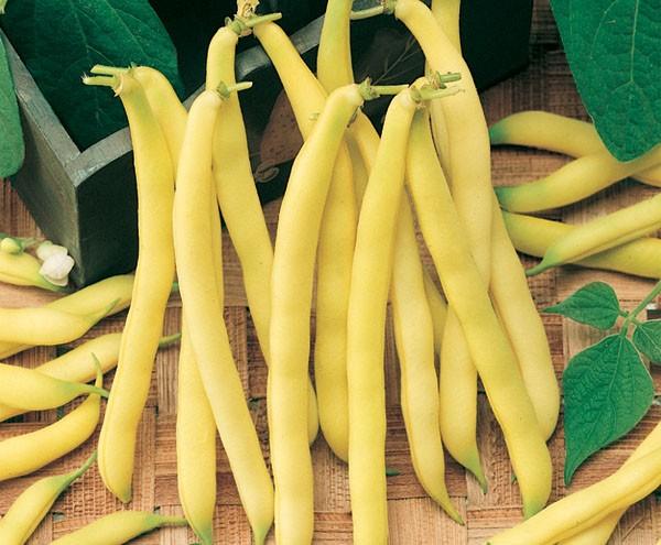 Feijão Vagem Amarelo Baixo
