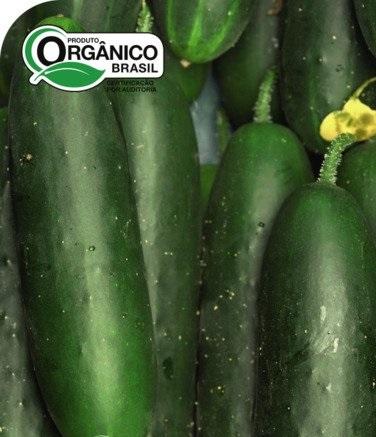 Pepino Aodai Melhorado 100% Orgânica
