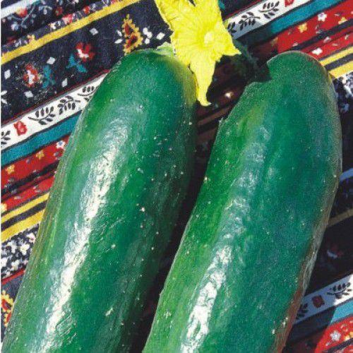Pepino Verde Comprido