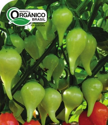Pimenta Iracema (Biquinho Vermelha) 100% Orgânica