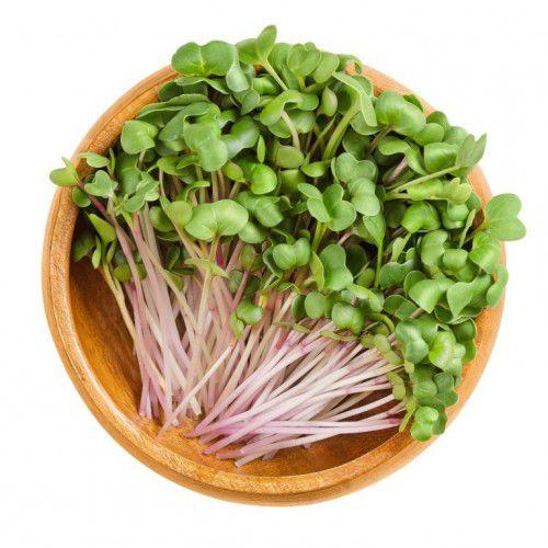 Rabanete (Microverdes)