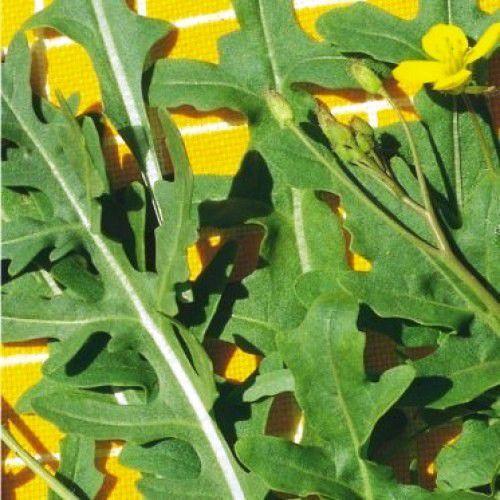Rúcula Silvestre (Microverdes)