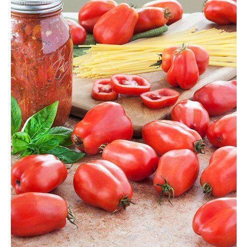 Tomate Italiano San Marzano