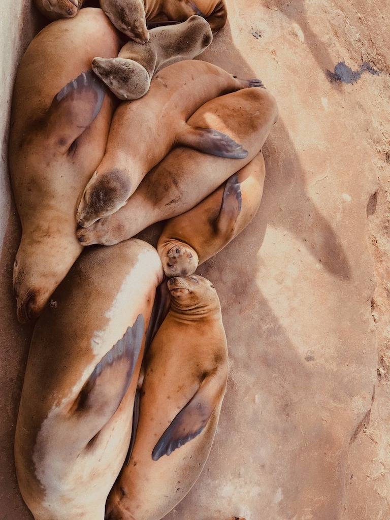 Aconchego animal por Beatriz Valverde