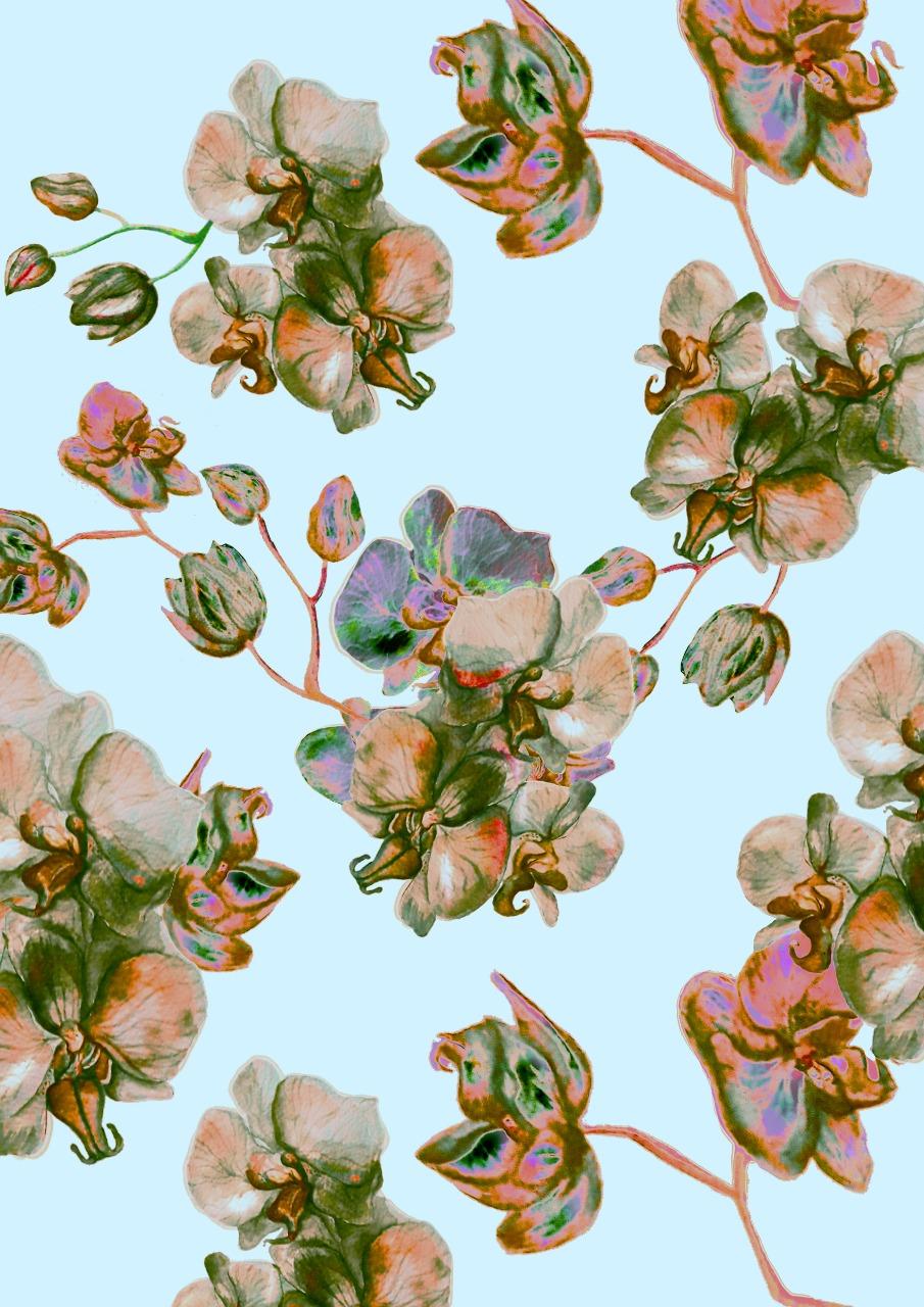 Aquarela Rosê por Cecília Arguello