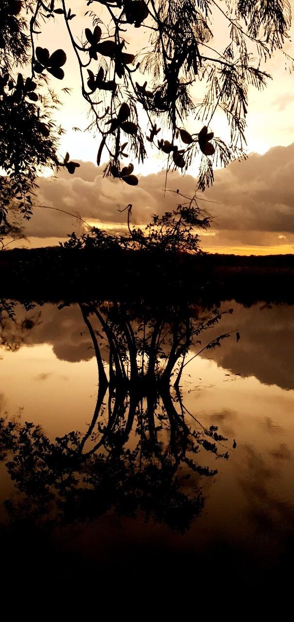 Pantanal por Daniel Cruz