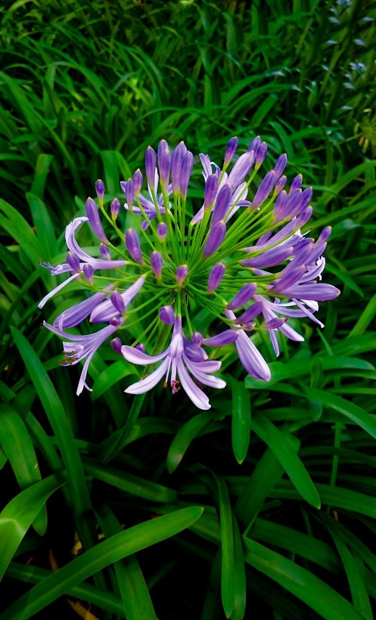 Buquet de Flores por Daniel Cruz.